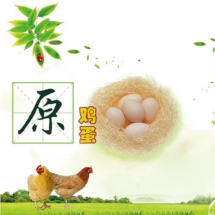 懒觉大王  散养鸡  土鸡蛋 20枚全国包邮